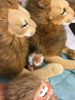 De Rob leeuwen, Jealous, Whiskers en Peace Bor