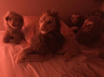 Rob Jealous Leeuw