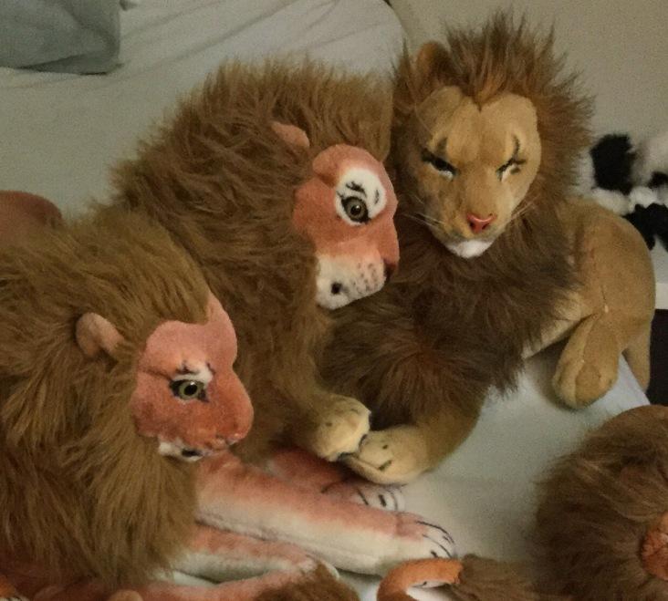 Master Lions en Rob Jealous Leeuw