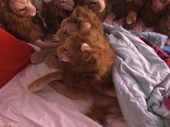 Rob leeuwen