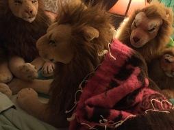 Grappige leeuwenposities