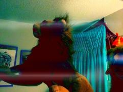 Luchtspringende Rob Lion Young