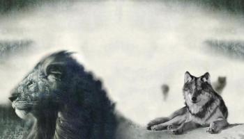 Rob Nanninga en Pepijn van Erp, de Leeuw en de Wolf. Beeld vriendelijk geleend van https://www.spirithoods.com/blogs/news/30552065-why-lions-aren-t-shy-and-wolves-don-t-play-by-rules