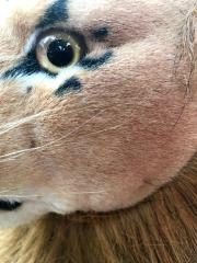 De negende Rob Nanninga Leeuw van de meerling