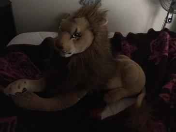 """Rob Hungry Lion, aka """"The Eye"""", hij kijkt altijd een beetje link, omdat hij altijd hongerig naar mijn liefde en misschien ook een beetje gewoon hongerig is"""