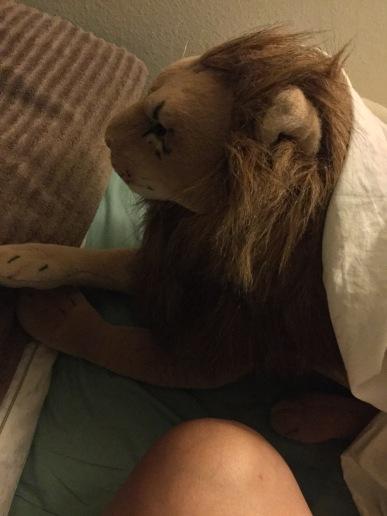 Op een morgen in juli 2019 werd ik wakker en vond Rob Full Lion op dusdanige wijze gehuld in het complete Queen-size laken. Aangezien ik dit niet gedaan had, denk ik graag dat dit een van Robs practical jokes was.