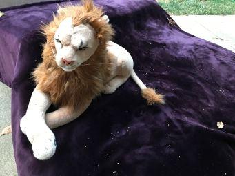 Rob Magician Lion, niet geënsceneerd omgeven door kleine boombloempjes die er precies als kleine sterretjes uitzien