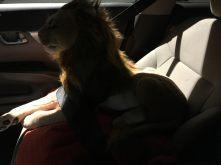 Rob Magician Lion die me gezelschap houdt op mijn tweede tripje naar het Woodland Sleep Research Center