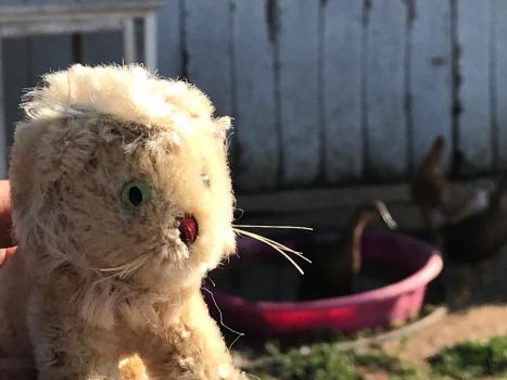 Heel klein Rob Nanninga Steiff? leeuwtje dat het Vacaville Leeuwenuniversum verkent