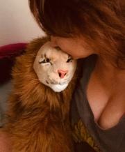 Rob Nanninga Magician Lion en Constantia