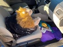Most Male Rob Lion en Whiskers-metgezel naar Rohnert Park, Californië