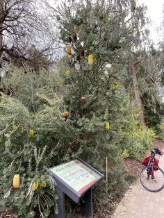 Arboretum, UC Davis