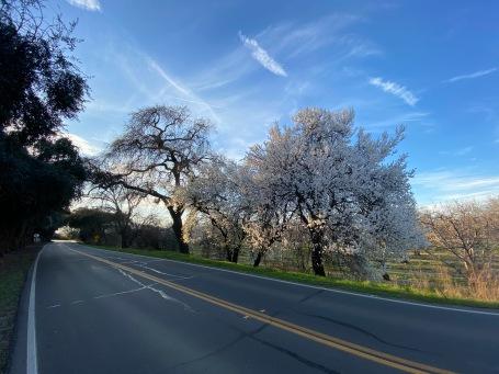 Winters, CA